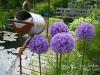 habillage-de-jardin-arrosoirs-37