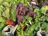 habillage-de-jardin-arrosoirs-ath-tournai-lille-13
