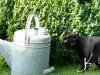 habillage-de-jardin-arrosoirs-ath-tournai-lille-6