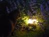 eclairage-electricite-Ath-Tournai-Lille-016