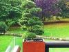 realisation-jardiniere-15