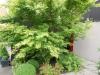 realisation-jardiniere-28