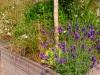 realisation-jardiniere-ath-tournai-lille-9
