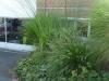 réalisation-jardin-contemporain-Ath-Tournai-Lille-047
