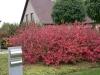 réalisation-jardin-contemporain-Ath-Tournai-Lille-050
