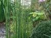 realisation-creation-jardin-japonais-012