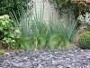 realisation-creation-jardin-japonais-013
