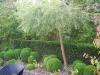 realisation-creation-jardin-japonais-016