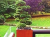 realisation-creation-jardin-japonais-ath-tournai-lille-001