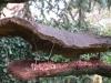 habillage-de-jardin-nichoirs-39